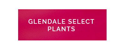 Glendale Select Plants